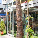 gastrocomic restaurant albir
